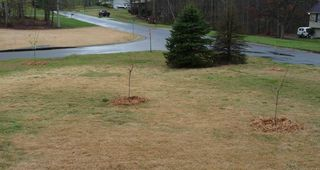 View from porch - right side of yard