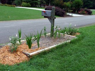 Mailbox bed june 2009